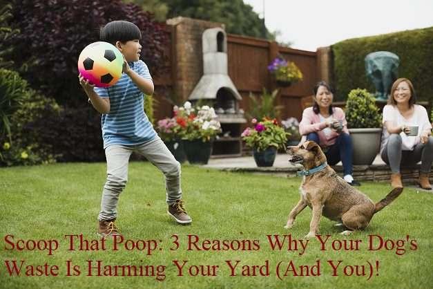 scoop that poop